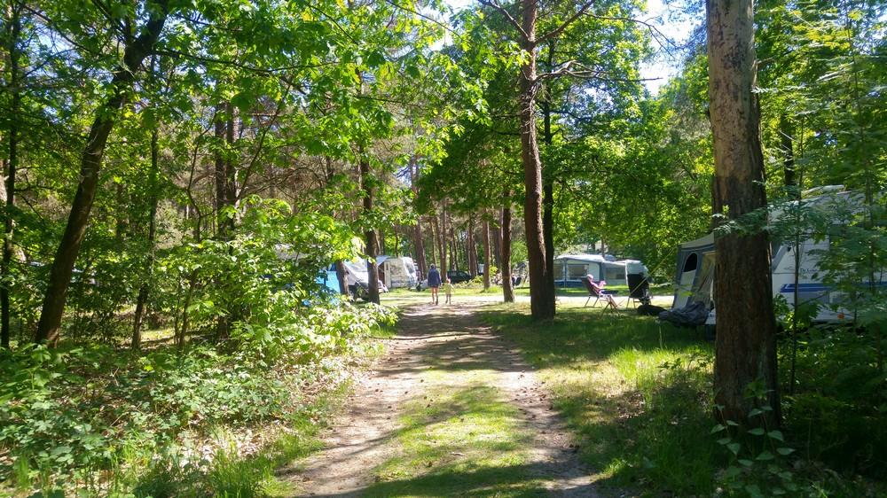 drenthe_campings_boscamping_langeloerduinen04