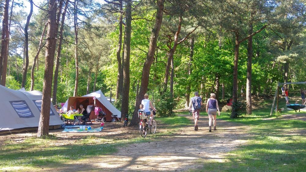 drenthe_campings_boscamping_langeloerduinen07
