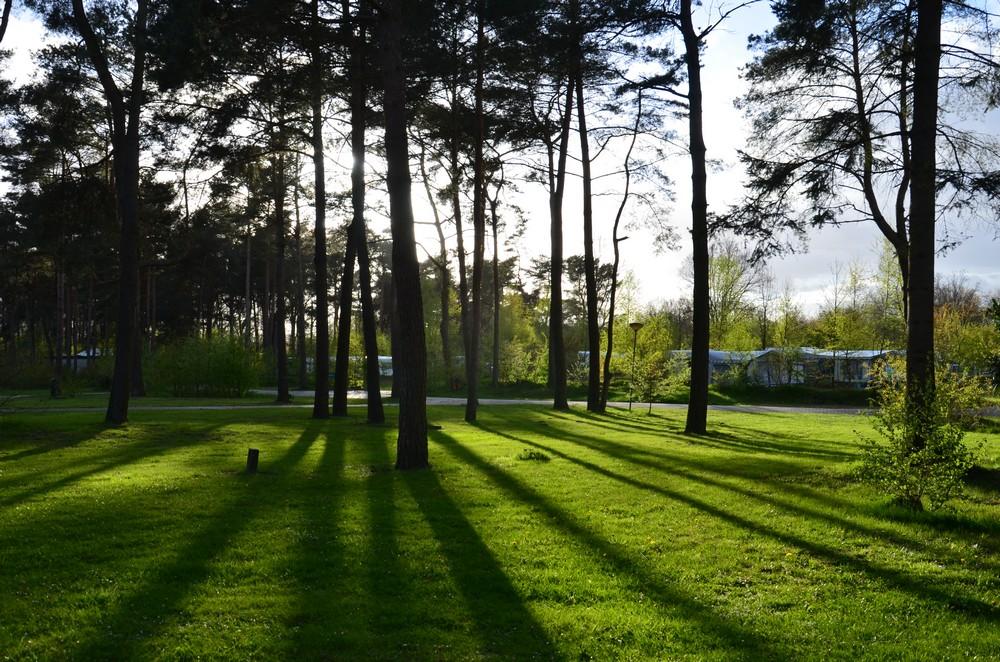 Vakantiepark_Diana_Heide_Drenthe06