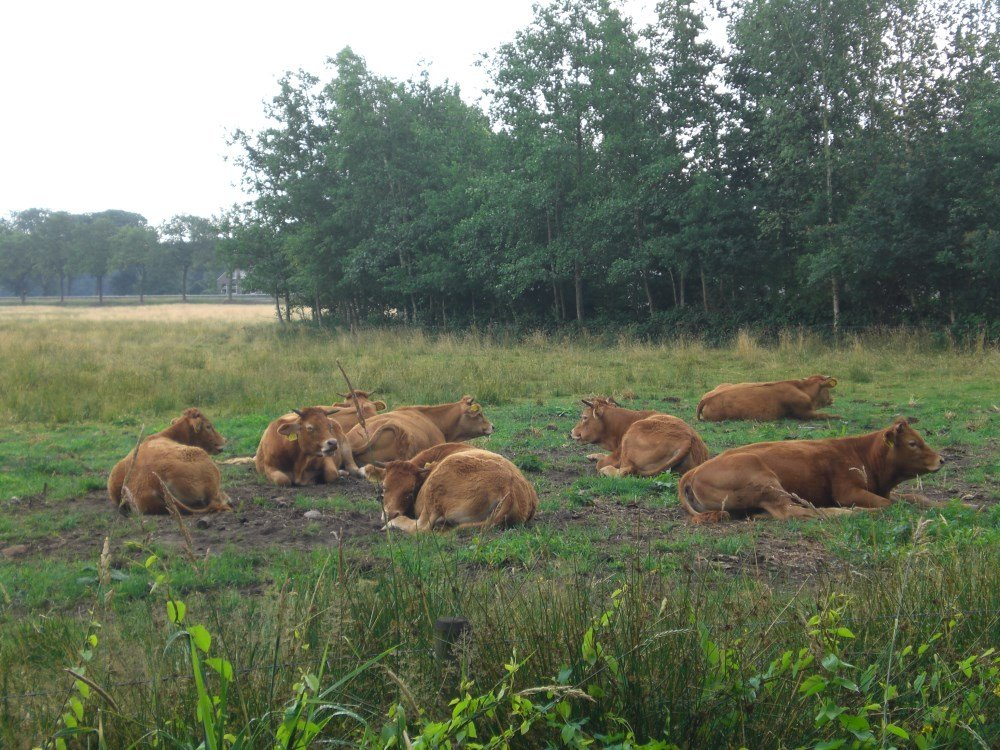 camping_jellys-hoeve_drenthe16
