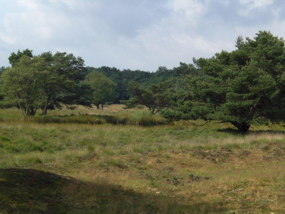 camping_jellys-hoeve_drenthe18
