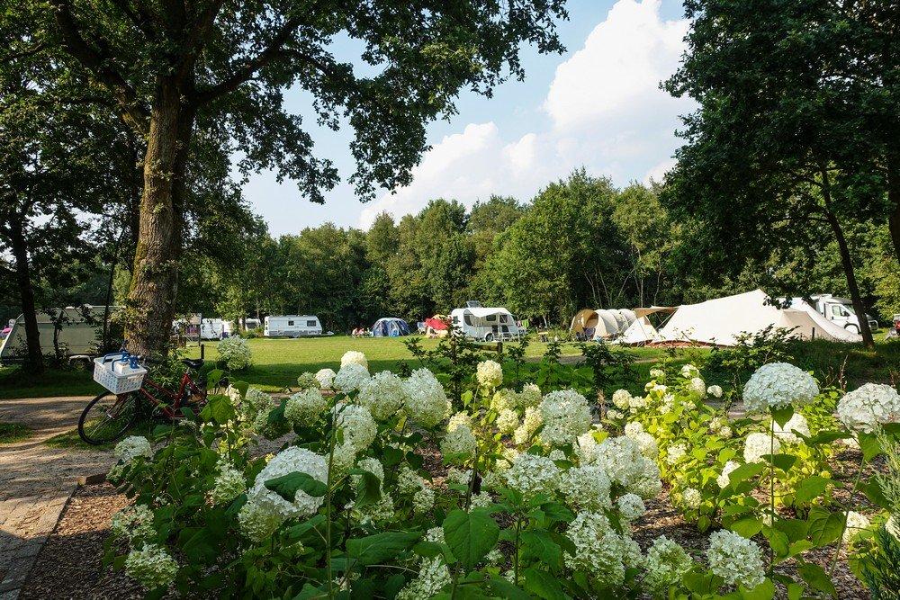 camping_landclub_ruinen_drenthe002