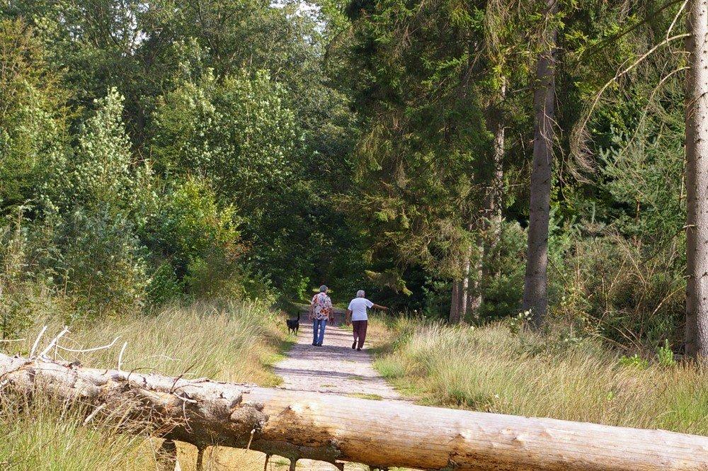 camping_de_reeenwissel_in_drenthe015