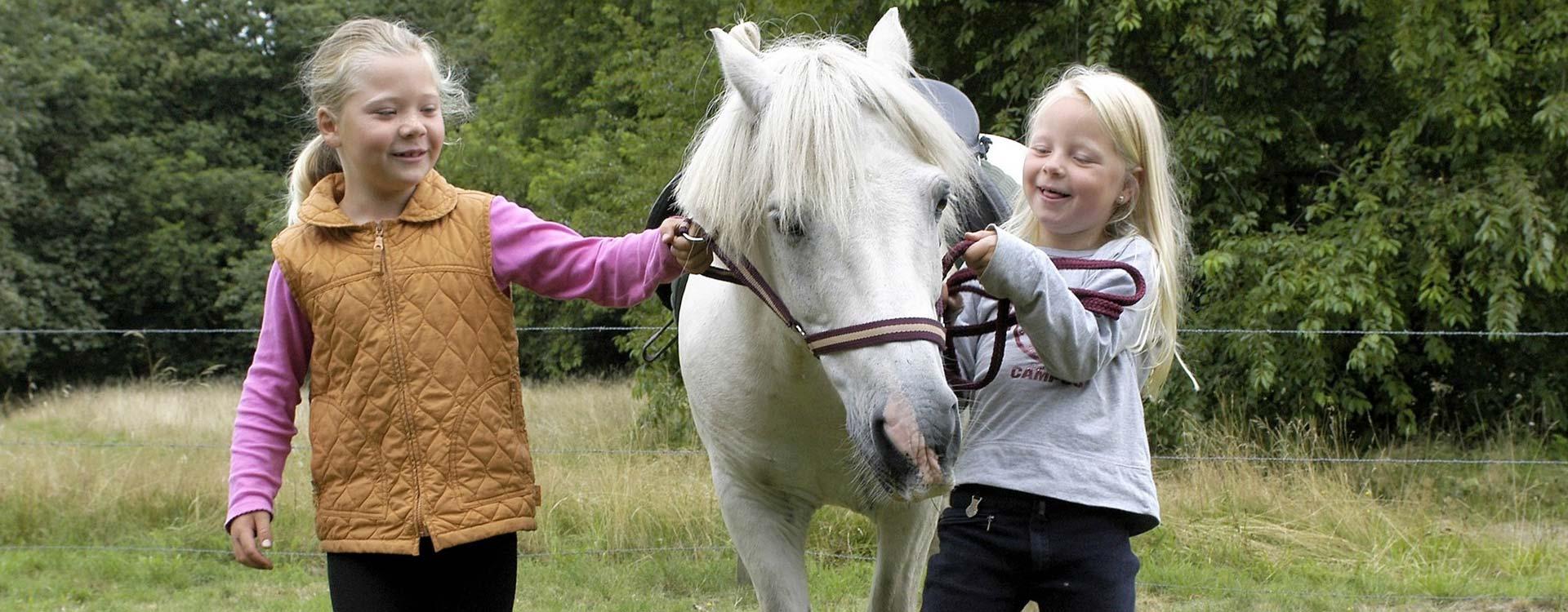 camping-de-vledders-pony-rijden